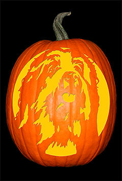 Bearded Collie Pumpkin72