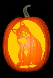 Crooked Cat Pumpkin120