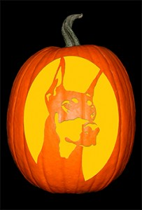 Doberman Pumpkin72