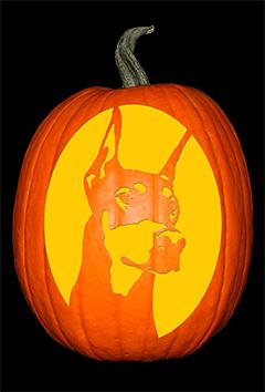 Doberman Pumpkin72