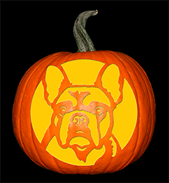 Frenchie Pumpkin72