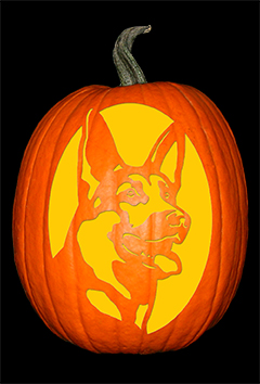 German Shepherd Pumpkin72