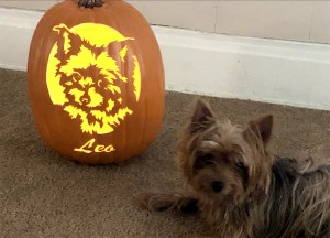Leo with Pumpkin