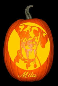Mila_Dalmation Pumpkin