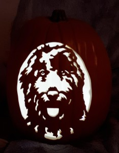 goldendoodle carve