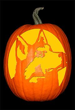Husky Pumpkin72