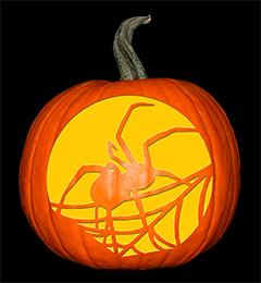 Spider Pumpkin72