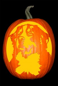 Bernese Mountain Dog Pumpkin