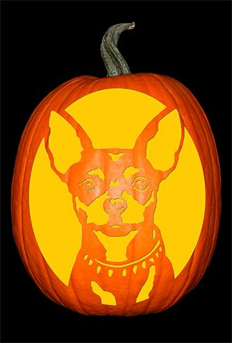Chihuahua 1 Pumpkin