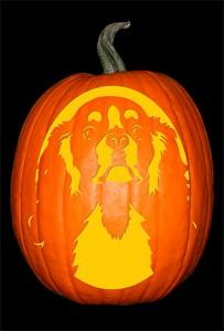 cavalier-king-charles-pumpkin