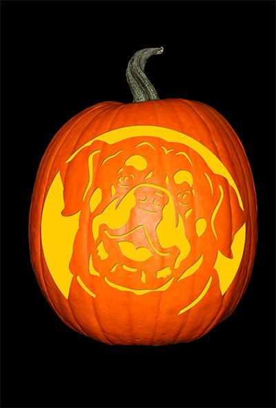 Rottweiler Pumpkin
