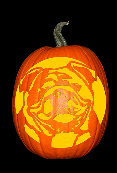 English Bulldog Pumpkin
