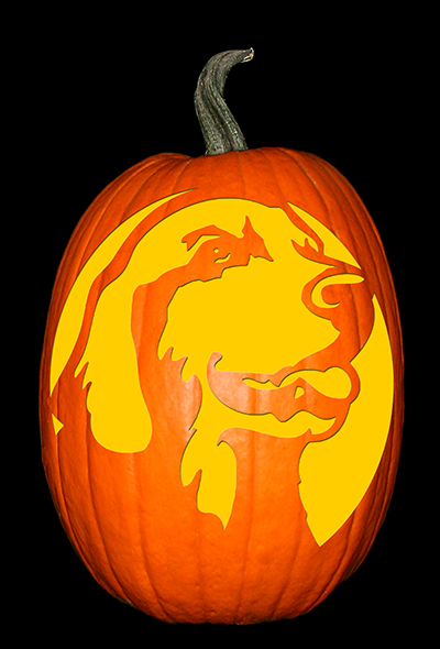 Golden Retriever Pumpkin