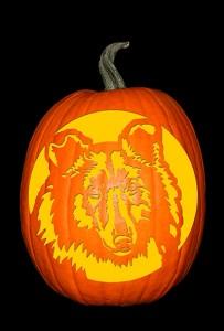 Rough Collie Pumpkin