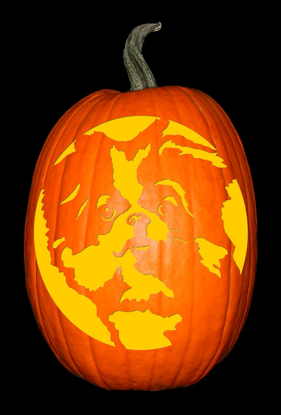 Japanese Chin Pumpkin