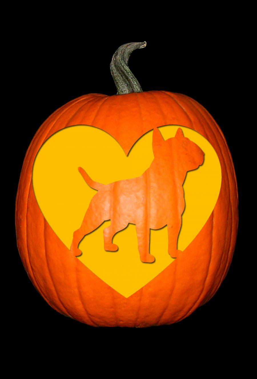 Love My Bull Terrier Pumpkin
