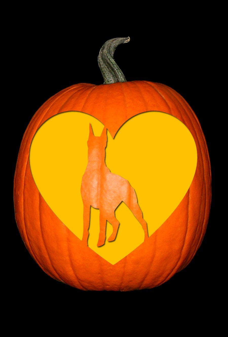 Love My Doberman Pumpkin