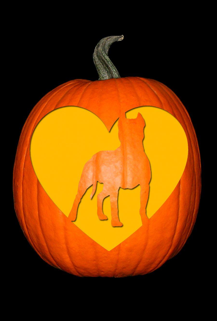 Love My Pit Bull Pumpkin