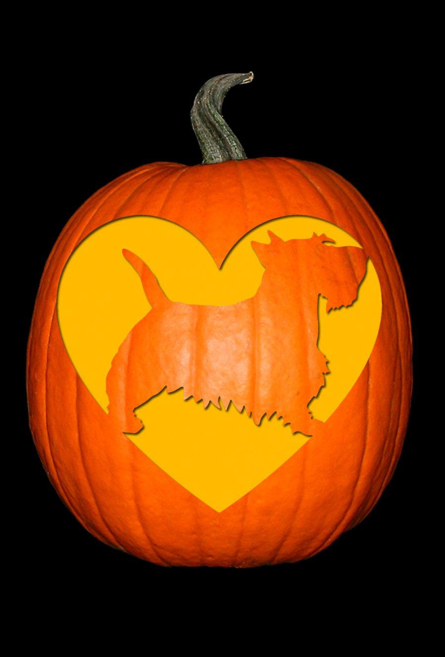 Love My Scottish Terrier Pumpkin
