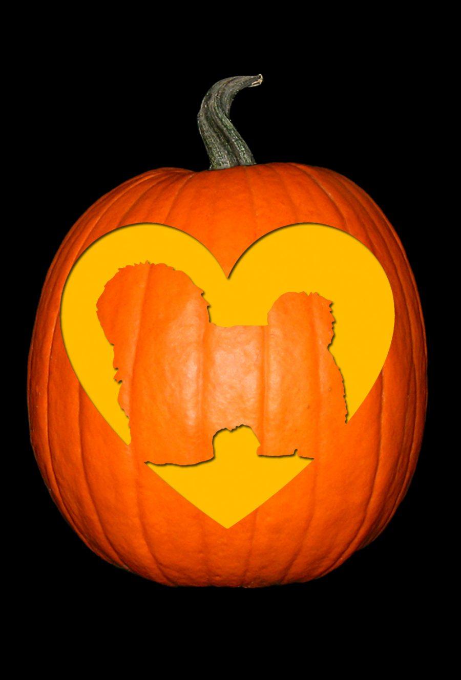 Love My Havanese Pumpkin